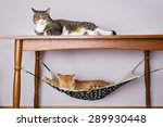 Two Domestic Cat Sleeping  One...