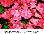 the background of many pink... | Shutterstock . vector #289944524