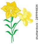 yellow lilies isolated on a... | Shutterstock .eps vector #289994834