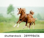 Running Chestnut Horse In...