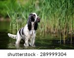 Wet Dog Standing In Water
