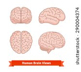 human brain views. top  frontal ...