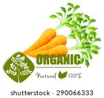 farm fresh organic carrots with ... | Shutterstock .eps vector #290066333