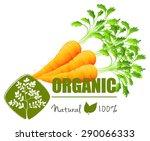 farm fresh organic carrots with ... | Shutterstock .eps vector #290066333