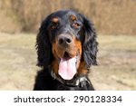 cute gordon setter | Shutterstock . vector #290128334