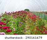 flower greenhouse | Shutterstock . vector #290161679