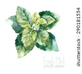 watercolor mint. hand draw mint ... | Shutterstock .eps vector #290181554