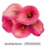 Fresh Calla Lilly Flowers...
