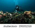 diver take a photo video upon... | Shutterstock . vector #290351510