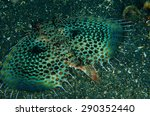 scuba diving lembeh indonesia... | Shutterstock . vector #290352440