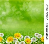 summer landscape. flowers | Shutterstock . vector #290377010