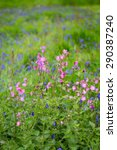 Small photo of Bluebells and other wild flowers at Godolphin cornwall england uk