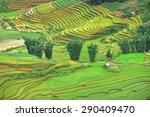 rice fields on terraced in... | Shutterstock . vector #290409470