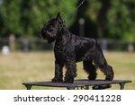 one female dog of... | Shutterstock . vector #290411228