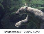 Portrait Of White Bear...