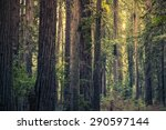 redwood mystery forest ... | Shutterstock . vector #290597144