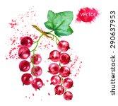 red currants  watercolor... | Shutterstock .eps vector #290637953