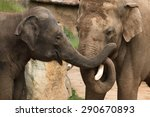 two indian elephants  elephas... | Shutterstock . vector #290670893
