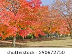 Red Maple In The Autumn Season...