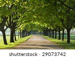 green alley with trees in the... | Shutterstock . vector #29073742