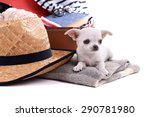 adorable chihuahua dog and... | Shutterstock . vector #290781980