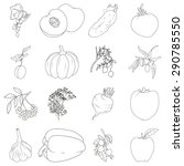 coloring book. set of fruits... | Shutterstock . vector #290785550