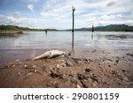 Dead Fish On Lake