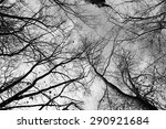 trees against sky black and... | Shutterstock . vector #290921684