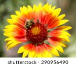 A Bee Collecting Pollen On A...