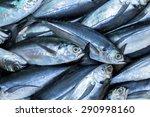 Tuna Fish On Ice Exposition Se...