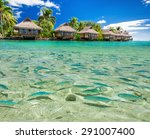 fish swimming in the tropical...   Shutterstock . vector #291007400