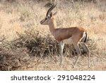 A Deer Cub Curiously Roaming...