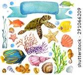 Exotic Fish  Coral Reef  Algae...