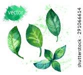watercolor plant mint. | Shutterstock .eps vector #291066614