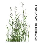 plant isolated collection   Shutterstock . vector #291093836