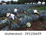 tequila  jalisco  mexico  ... | Shutterstock . vector #291156659