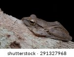 macro image of a tree frog | Shutterstock . vector #291327968