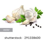 isolated garlic painting... | Shutterstock .eps vector #291338600