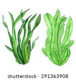 Watercolor Seaweed  Green...
