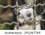 White Squirrel Climb In Cage