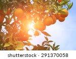 Trees With Orange  With...