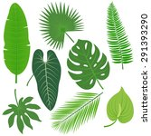 Tropical Plant Leaves Vector...