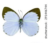 Small photo of Blue butterfly, Delias butterfly (Delias belisama) in fancy color profile, isolated on white background