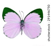 Small photo of Pink butterfly, Delias butterfly (Delias belisama) in fancy color profile, isolated on white background
