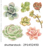 watercolor collection of... | Shutterstock .eps vector #291452450
