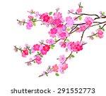 Pink Cherry Blossom  Sakura...