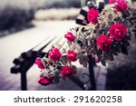 Stock photo rose garden in the park with empty wooden bench 291620258