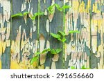 grunge wood panels texture with ...   Shutterstock . vector #291656660