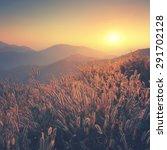 dry grass sky summer sunset... | Shutterstock . vector #291702128