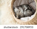 Stock photo cute tabby kittens sleeping and hugging in a basket 291708953